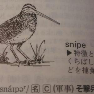 ワンピースの海軍のたしぎ(由来は鳥)も動詞になってました!