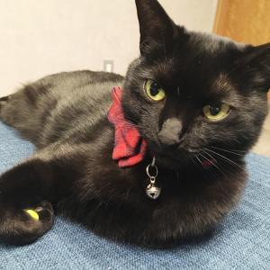 ツンデレ猫が半年間、警戒し続けたキャットタワー