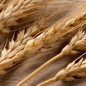 小麦があなたの体調を悪くしている!?