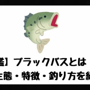 【魚図鑑】ブラックバスとは!?【生態・特徴・釣り方を紹介。】