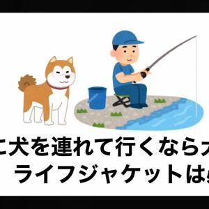 釣りに犬を連れて行くなら犬用ライフジャケットは必須!【おすすめや必要な理由】