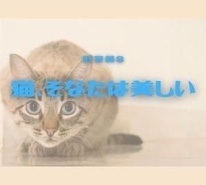 猫、そなたは美しい。 形容詞8