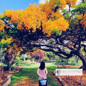 アラフィーの現在過去未来とは・ハワイの金色の小道を辿る