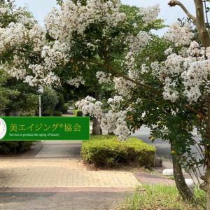 真夏の花「百日紅」今日はハグの日