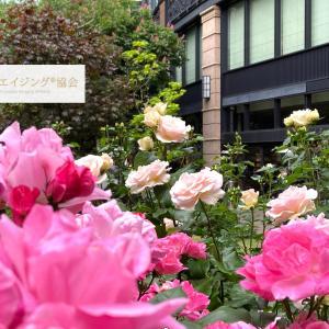 コロナ禍でもバラ開花満開・花と静かに過ごす時間