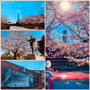 桜は美術館で見るに限る・千葉県立美術館の桜