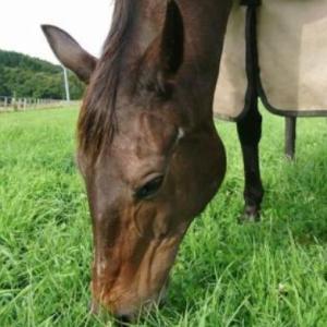 【社台・サンデー】コロナに打ち勝つ募集馬検討とは?