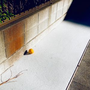 〚花空恋慕🌹🌙(カクレンボ)的 #404美術館 〛2021.1.21〜『【〔ヤッタ〕コト】…』