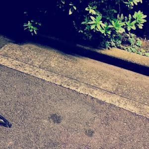 〚花空恋慕🌹🌙(カクレンボ)的 #404美術館 🖼〛2021.2.5〜『〔捨テ〕て…』