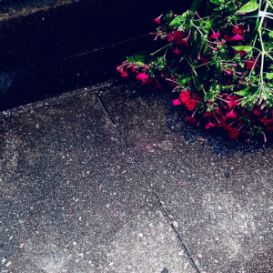 〚花空恋慕🌹🌙(カクレンボ)的 〖#思い出の曲 💿♬🌠〗〛 2021.9.13 〜 【Danger】 (BTS/防弾少年団) に寄せて…〜