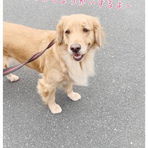 わんダフルの紹介!