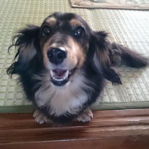実家の愛犬が「メラノーマ(悪性黒色腫)」を発病したことから思うコト