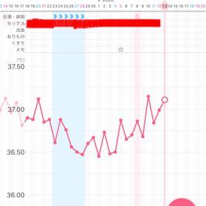 【漢方療法6周期目】~D20・高温期4日目~