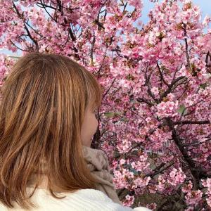 2年前と同じ場所で桜を愛でる