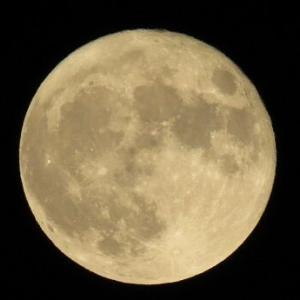 明日は満月ですよ