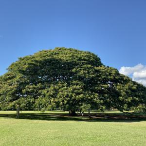「この木なんの木気になる木」日立の木があるモアナルアガーデン
