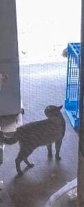 猫のあいびき