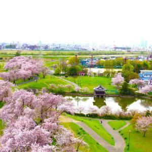 愛知の川 洗堰緑地の桜並木