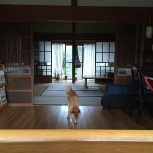 我が家の耐震をどうするのか問題 (2)
