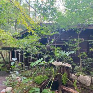 森の中に佇む心落ち着くカフェ「たび茶」長野安曇野
