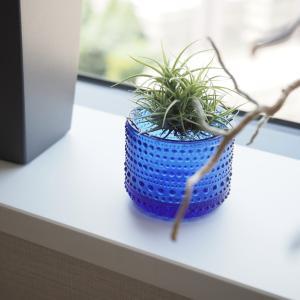 【植物を飾る】エアプランツ×iittala キャンドルホルダー