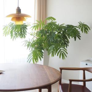 植物好きがオススメする、楽にキレイに育てられる魔法の鉢「レチューザ」