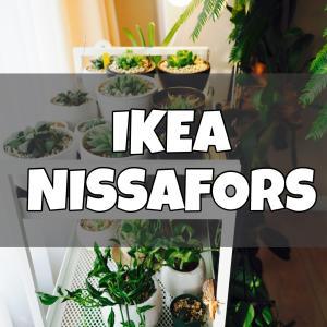IKEAのワゴンは植物の台としても超便利!もはや植物用なのかと錯覚するレベル