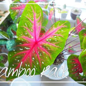 Amazonで「植物の棚」を買いました。UNHO・フラワースタンド。