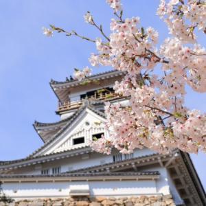 4月の草花の歳時記:高知城の桜@高知市
