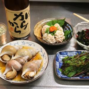 晩酌のアテ、白バイ貝の煮付け、白子ポン酢、つるむらさきおひたし、日本酒