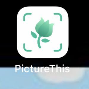 スマホアプリのPicture This
