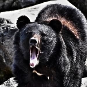 熊の凶暴さがわかる3つの話