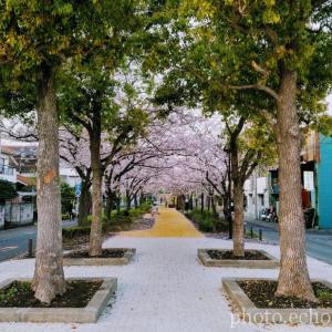 新浦安 富士見 しおかぜ緑道