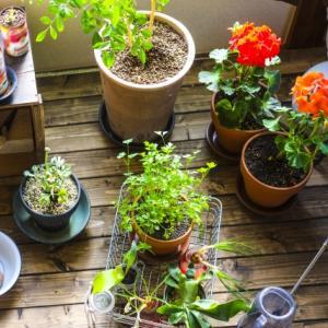 観葉植物を趣味に取り入れると驚くべき効果が!癒し効果もありストレス解消におすすめ!