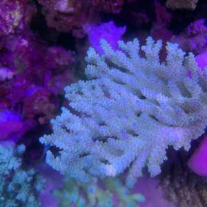 昨年末追加サンゴ♪