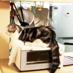 トースター猫