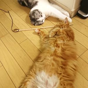 油断しすぎの猫達