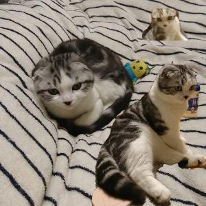 同じ猫が時空を超えてだらけてる