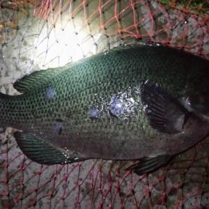 釣行報告 洲崎公園下の磯 (その3)