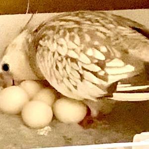 のの産卵 2クール2つめ。