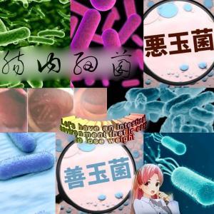 肥満と腸内細菌