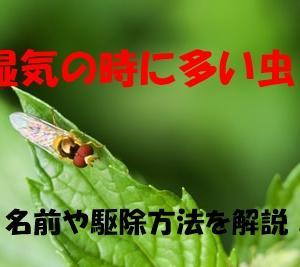 湿気が原因で来る白や黒色の「あの」小さい虫は何?駆除方法や対策も!