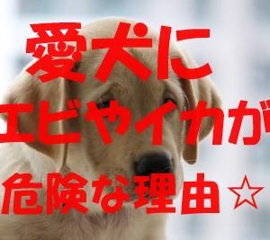 犬に生のエビやイカを与えたら吐いた!消化不良が起こる理由とは?