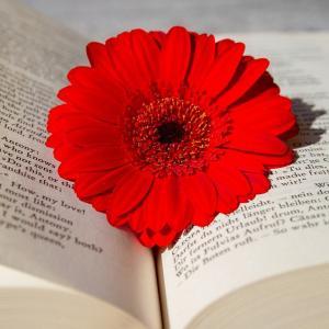花言葉がかっこいい花を集めてみた!かっこいい日本名(和名)や裏の花言葉を持つ花9選!元気が出る花言葉も!