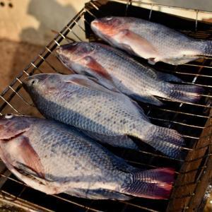 今後のルートについて考える+釣りをしてワンコを洗ってバーベキュー