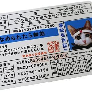 世界一周中に免許証の期限が切れたら?