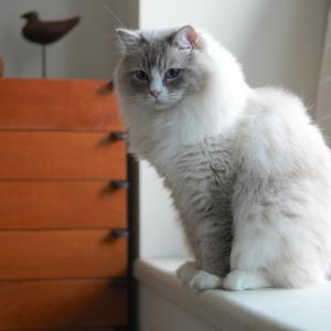 猫鍋増設計画