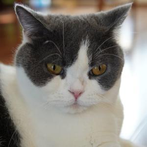 猫ニキビ発症!