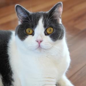 猫ニキビその後