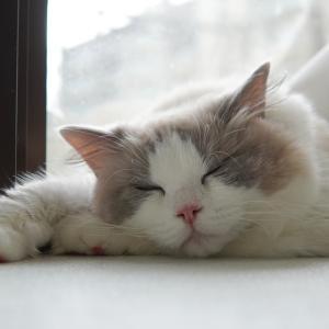 幸せ就寝タイム♪